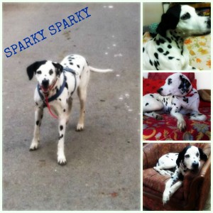 Sparky book cover Collage